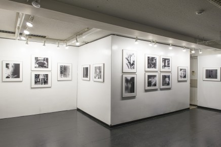 """reflection2014"" exhibition view"